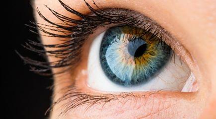 L'oeil, ou l'impossible evolutionisme