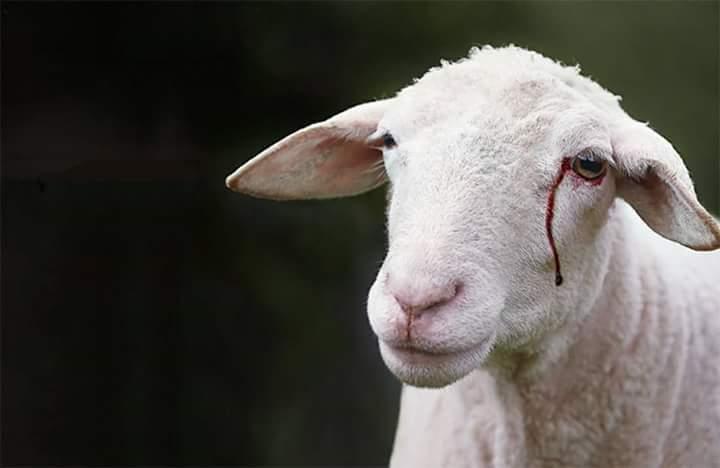 Nous aimons nos moutons !