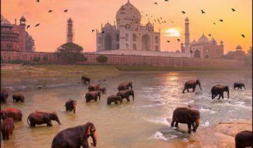 Delhi, une capitale de l'Islam